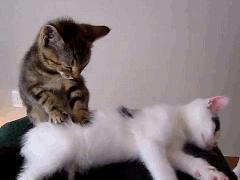 Kedilerin en çok hangi huyunu seviyorsunuz?