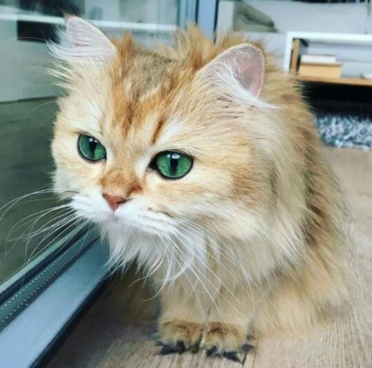 Kimler bu kedi gibi sıkılıyor 😐 ?
