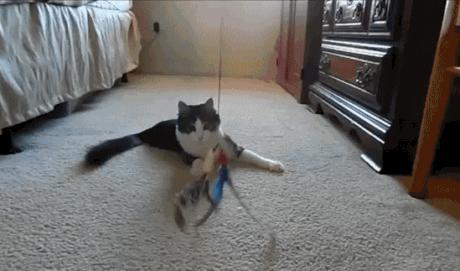 Kediler için en kullanışlı oyuncak hangisi?