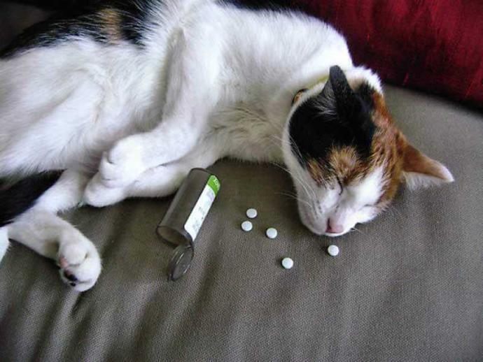 Arkadaşlar kedim uyku hapı içmiş bir zararı olur mu?