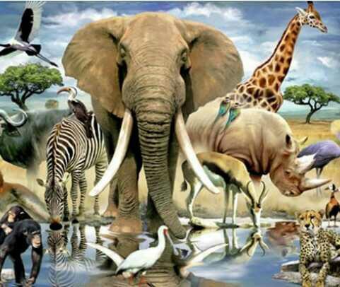 Ruhunuzu hangi hayvana benzetiyorsunuz? Sizin içinizde hangi hayvan var?