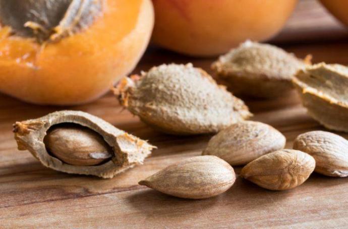 Acı kayısı çekirdeğinin kanserli hücreleri yok ettiği kanıtlandı! Sizce bir çok meyve çekirdeğinin bu denli mucizesi var mıdır?