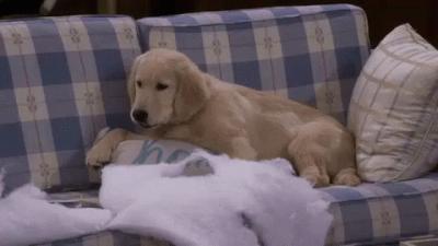 Kedi-köpek sahipleri buraya! Patili dostunun dökülen tüyleri ile nasıl baş ediyorsun?