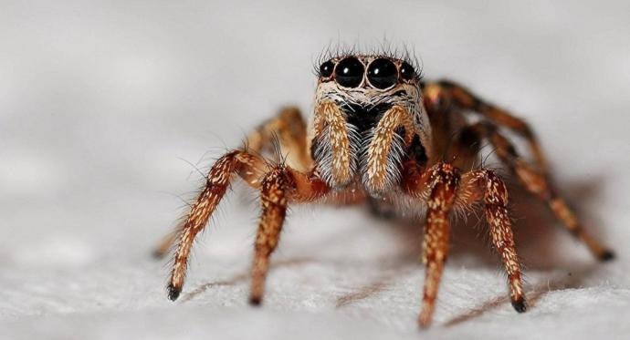 Örümceklerden korkuyor musunuz?