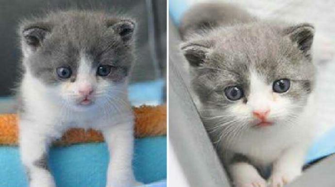 Çinli iş adamı ölen kedisini klonlattı! 🐈 İmkanın olsa sen neyi klonlardın?