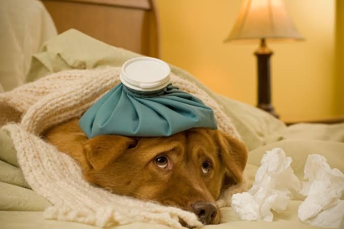 Doktor köpeği hasta olan bir çalışana 14 gün rapor verdi. Hayvanı hasta olan çalışana ülkemizde de rapor verilmeli mi?
