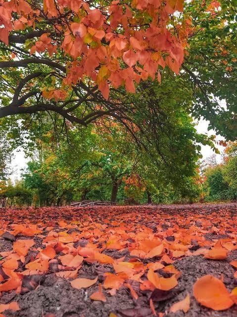 En sevdiğiniz mevsim hangisi?
