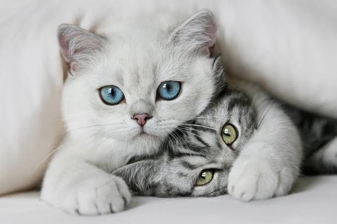 En sevdiğiniz hayvan ne desem?