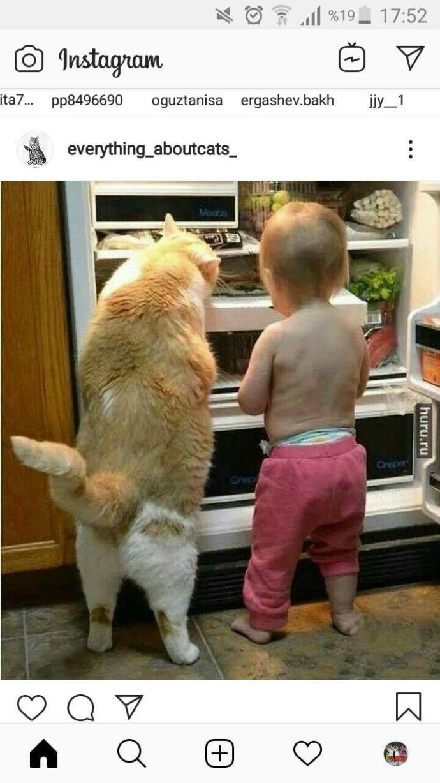 Böyle kedilere sahip olmak istermiydiniz?