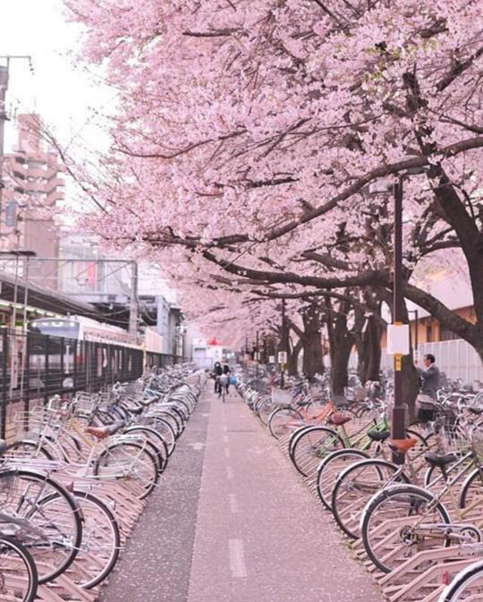 Sevgilinizle beraber bisiklet sürmeyi sever misiniz?