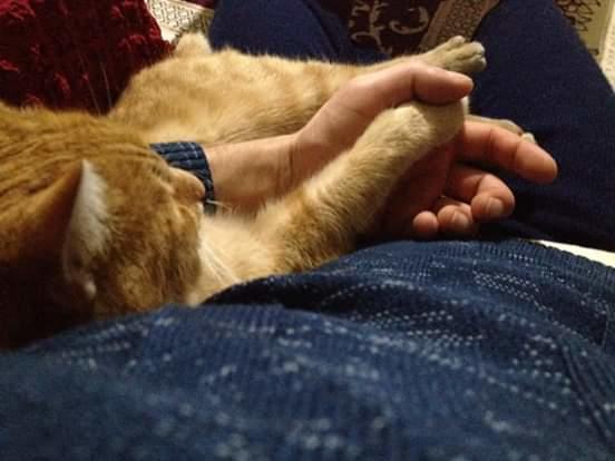 Benim olmadı. Ama şu kedinin verdiği mutluluğu veremeyen insanlar var.