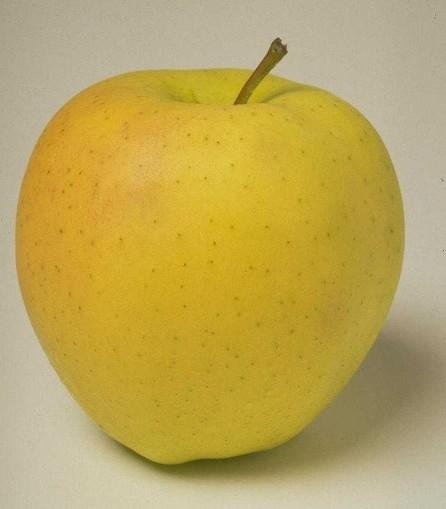 ELMA Sever misiniz?Hangi renk elmayı daha çok seviyorsunuz?