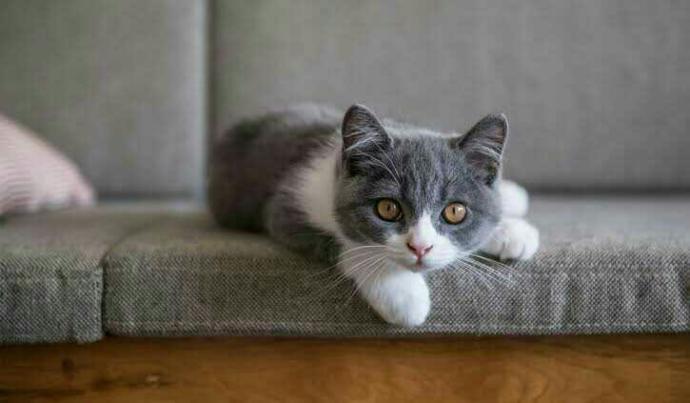 Bugün 17  Şubat  dünya kediler günü, kedi besliyor musunuz?