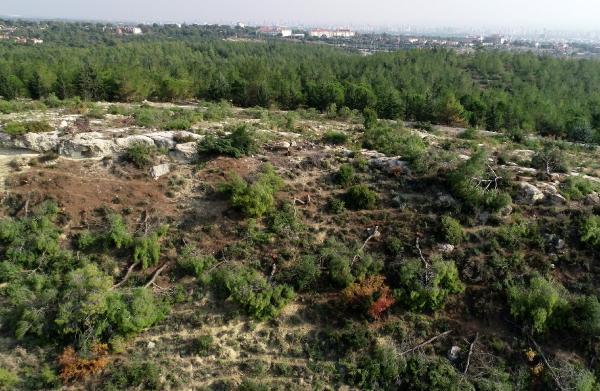 Bir gecede 1511 ağacı kesene ilk duruşmada tahliye verilmesi hakkında ne düşünüyorsunuz?