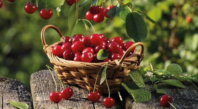 Vişne kompostosu hangi meyveden yapılıyor?
