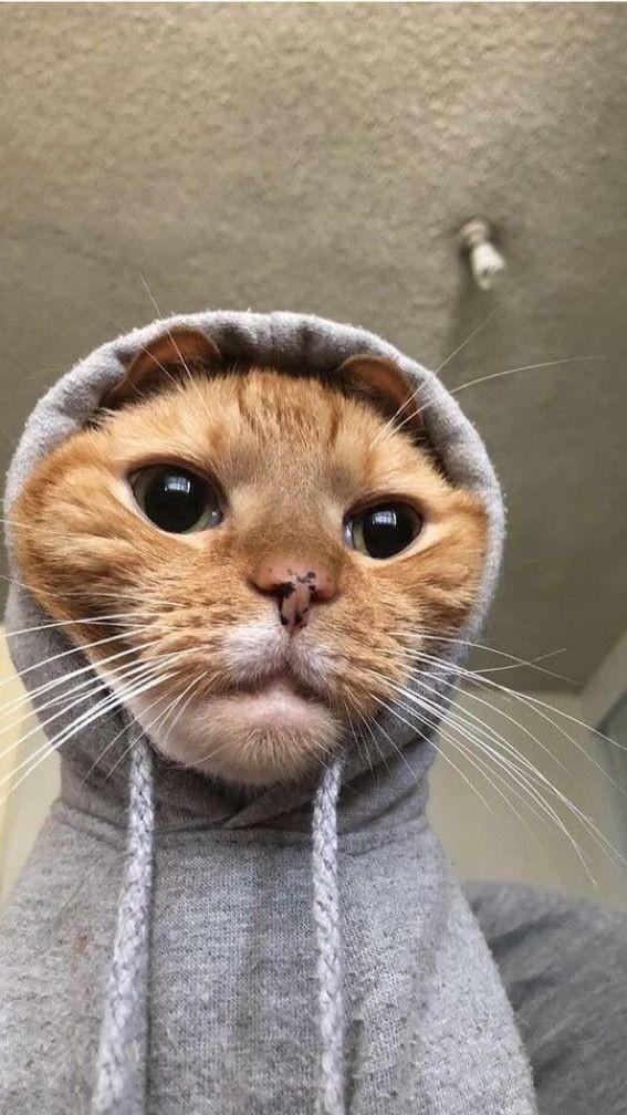 Herkese merhaba nasılsınız bugün nasıl geçiyor?
