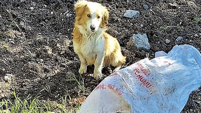 Köpeği çuvala koyup, ağzını bağladıktan sonra ölüme terk ettiler. Hayvana şiddetin cezası ne olmalı?