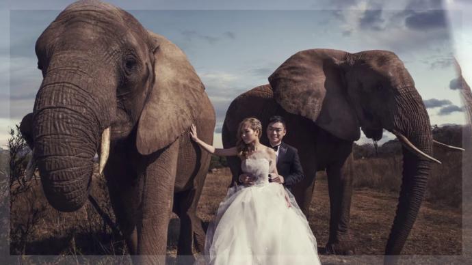 Sizce düğün yapmayalım yerine safari tatili yapalım diyen sevgili önde midir?
