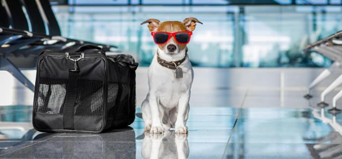 Tatile evcil hayvanınızı götürmeyi tercih eder misiniz?