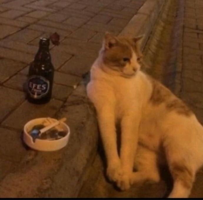 Sizce bu kedinin neyi var?