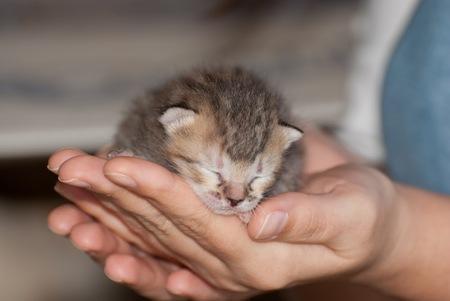 5199 sayılı Hayvanları Koruma Kanunu'nda yapılması önerilen düzenlemelerle sevimli dostlarımızın hayatlarında neler değişecek?