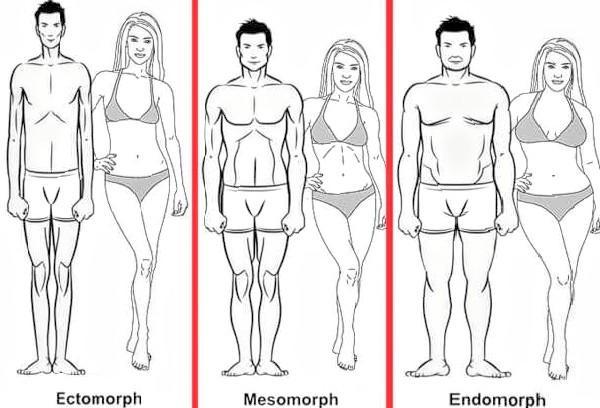 En temel halleriyle vücut tipleri Endomorf, Mezomorf ve Ektomorf olarak üçe ayrılır.