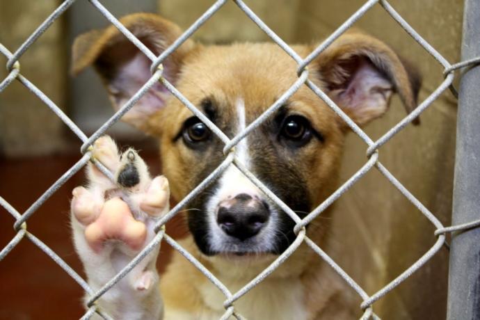 İnsanın insana acımadığı bu dönemde hayvanlara merhamet gösteren kaldı mı?