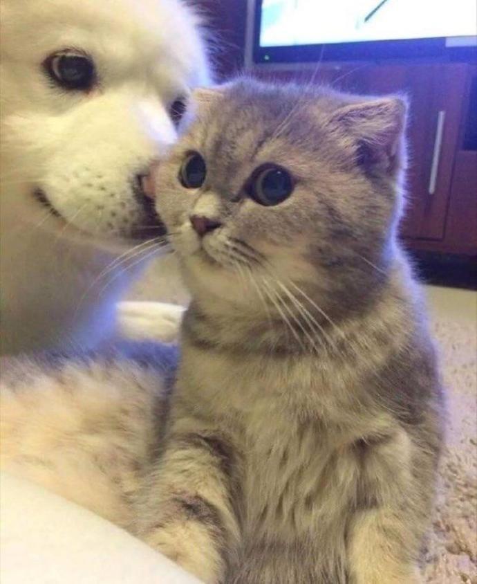 Kedi insanı mısın, köpek insanı mı?