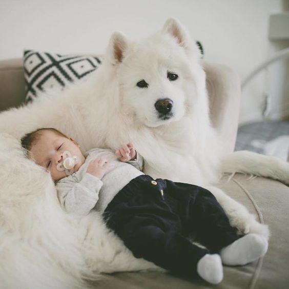 Bebeğiniz varken evde hayvan besler misiniz?