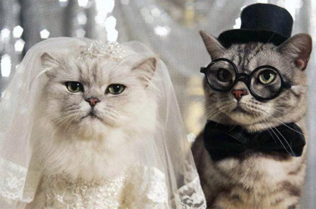 Hayvanlarla evlenmek yasal olsaydı, evlenir miydiniz?