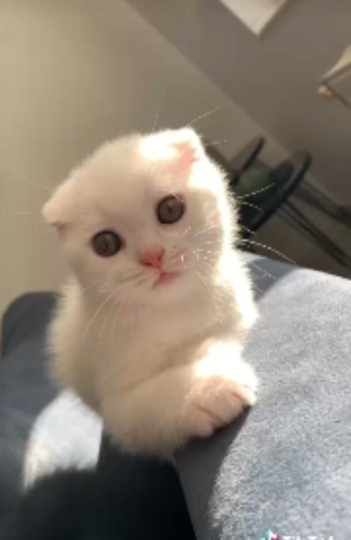 Bakın benim tatlışıma? Nasıl sizce 😇?