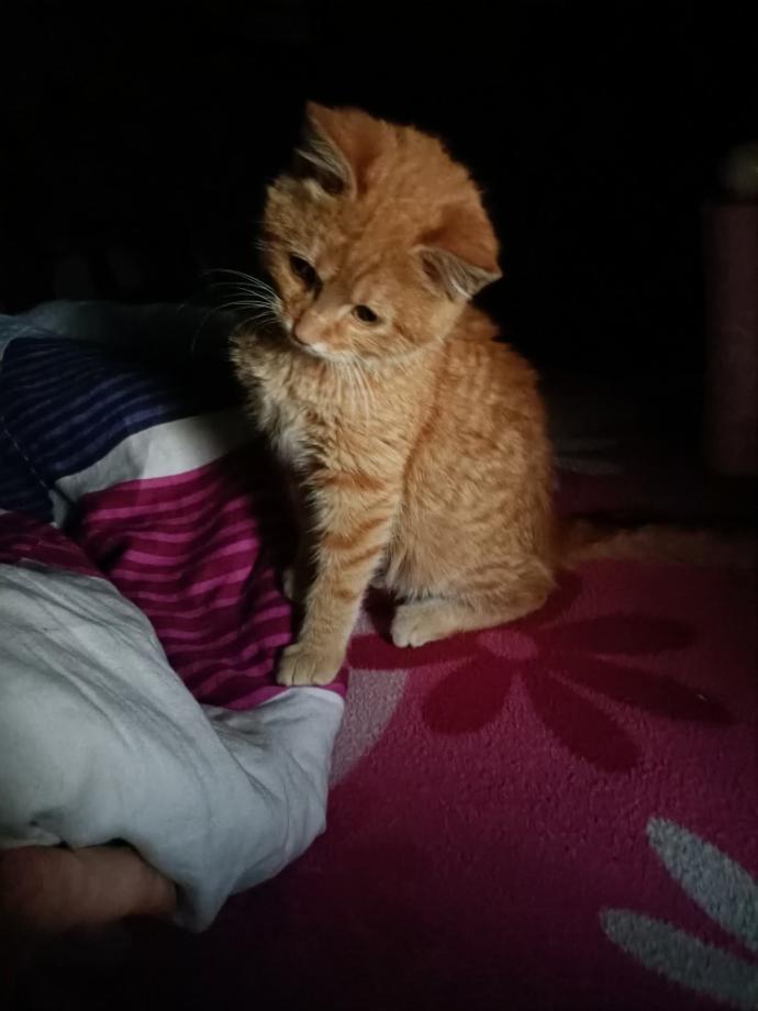 Kedi besliyormusunuz?