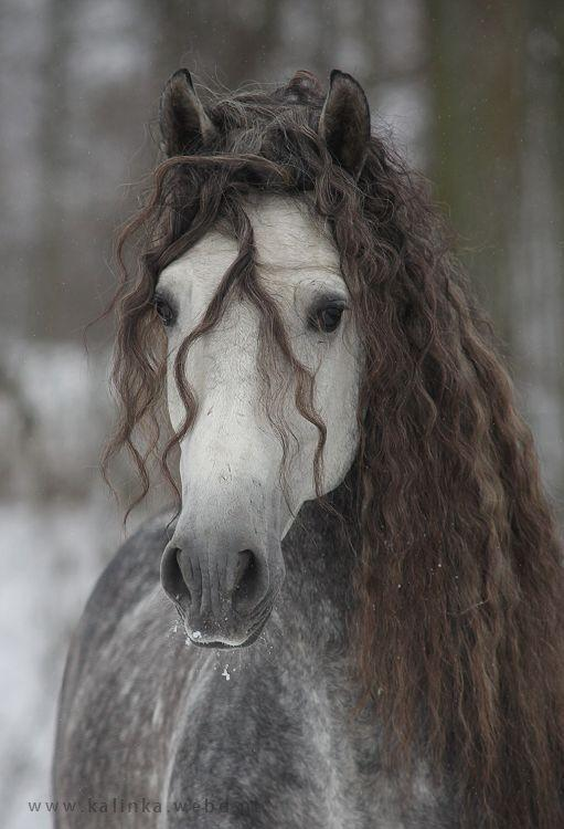Bir atınız olsa ismini ne koyardınız?