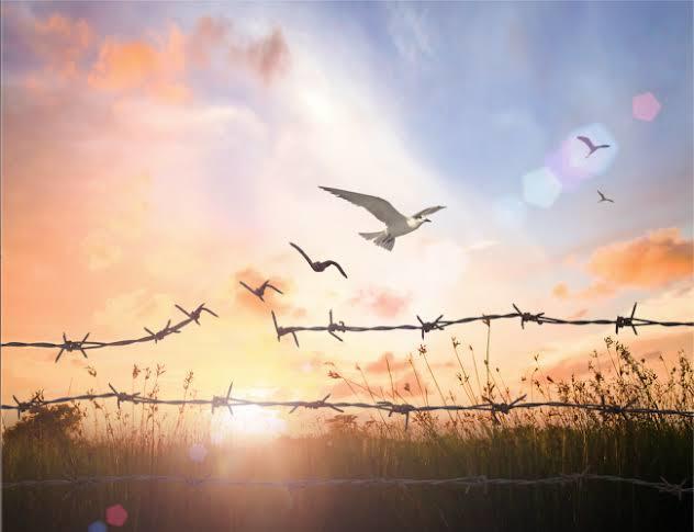 Özgürlük sizin için ne anlama gelir?