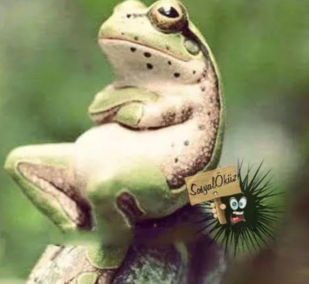 Göle su gelinceye kadar, kurbağanın gözü patlar Sizinde zamanında gelmeyen, olmayan, gerçekleşmeyen, yapılmayan neleriniz oldu?