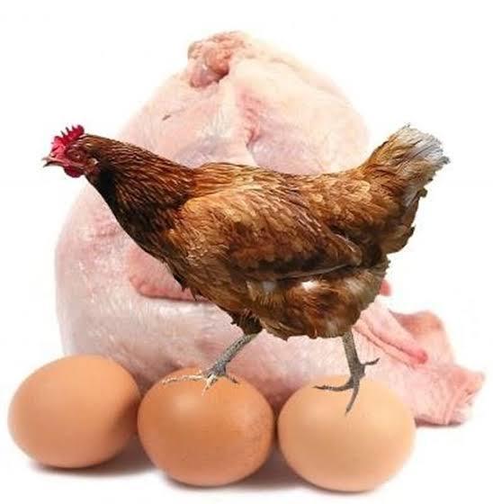 Tavuk ve yumurta tüketirken korkmalıymıyız?