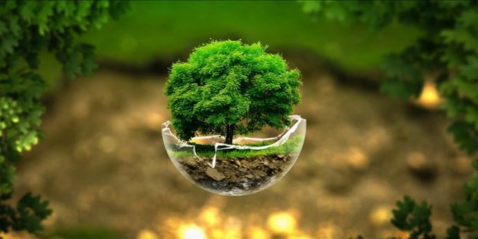 Doğayı korumak için ne yapıyorsunuz?