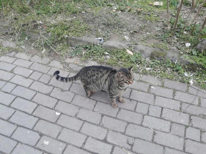 Veteriner klinikleri sokak kedilerini ücretsiz tedavi eder mi?