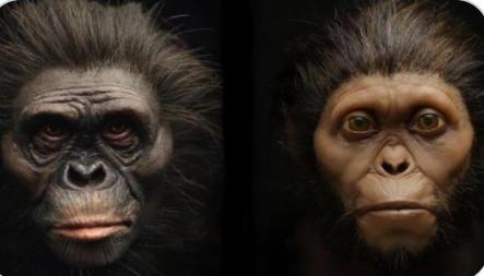 İnsanoğlunun eski atalarından olan iki kişinin suratları yeniden canlandırıldı! Sence atalarımız, böyle miydi?