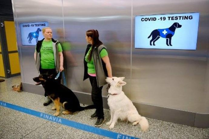 Belçikada Köpekler terli bezleri koklayarak Kovid-19u PCR testinden bir hafta önce tespit etti ! Ne düşünüyorsunuz?