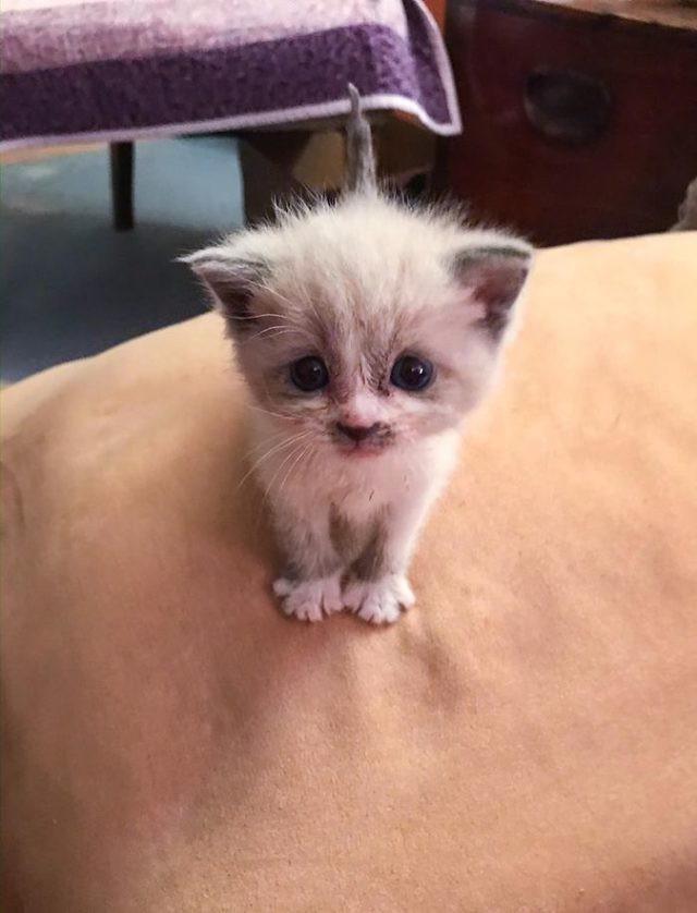 Abimin sevgilisi abimi dişi bir kediyi sahiplendiği için terk etti onları barıştırmalı mıyım?