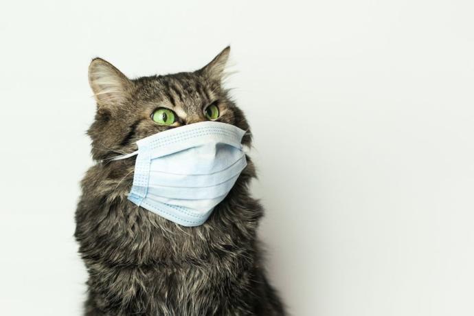 Korona olan kişilerle aynı ortamı paylaşan kediler, bu virüsün anahtarı bunlarda olabilir mi?