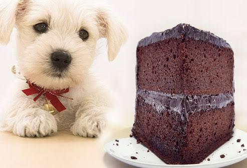 Çikolatanızı köpeğinizle paylaşır mısınız?