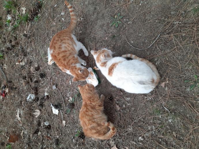Sokak kedilerini seviyor musunuz?