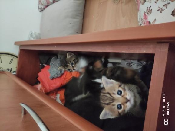 Yavru kediler ne zaman sütten kesilir?