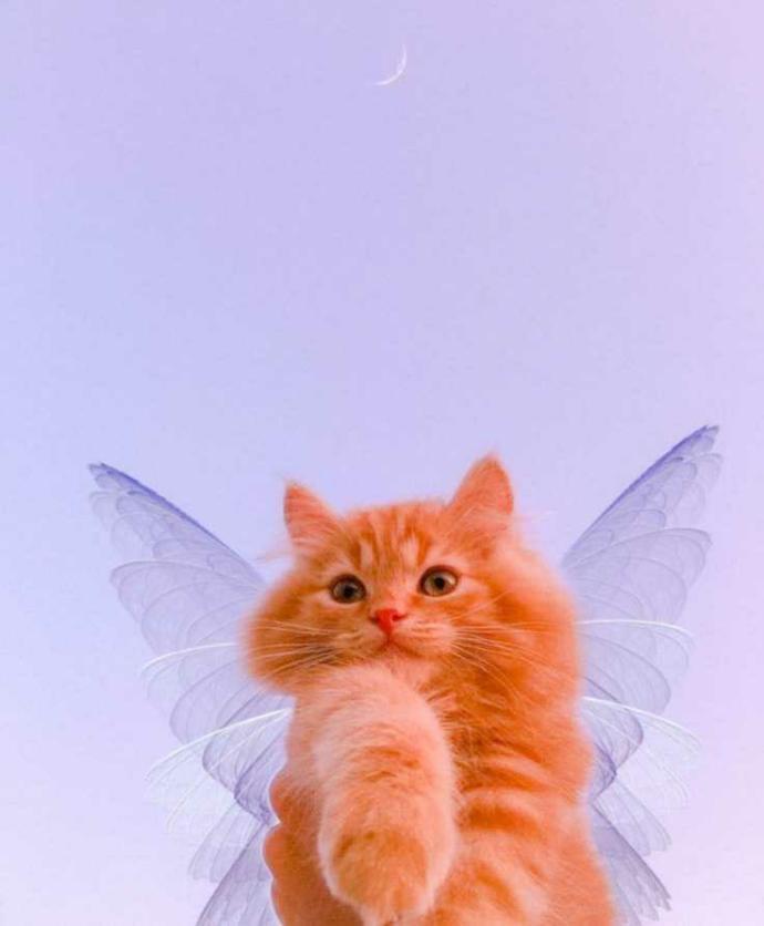 Sizce bir kediden daha güzel olan şey nedir?
