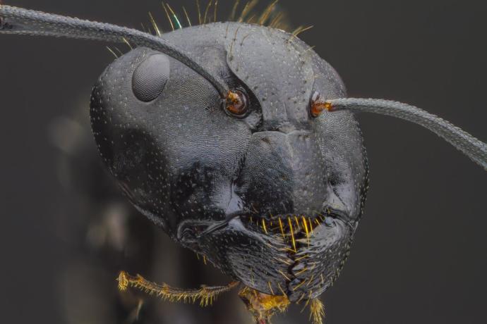 Bir karıncayı daha önce hiç bu kadar yakından gördünüz mü?