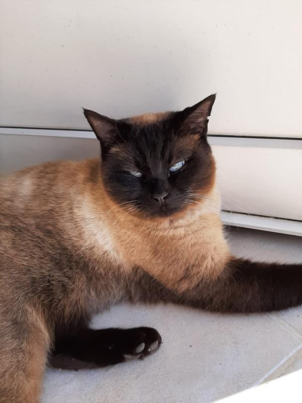 Kedi sahiplendim, isim önerileriniz neler?
