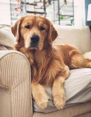 Evcil hayvanının olmasını isteseydin bu hangisi olurdu?