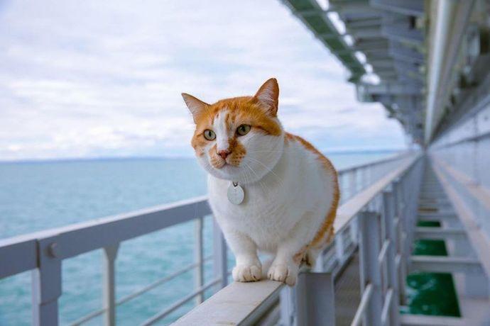 Sizce kedisi ile birlikte gemi yolculuğu yapacak olanlar neye dikkat etmelidir?